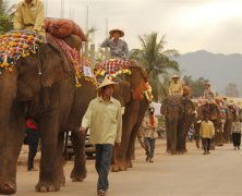 """Mark Community"" Greets Elephants to UNESCO World Heritage"