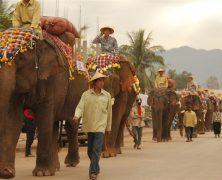 """Mark Community"" Greets Elephants to UNESCO World Heritage"