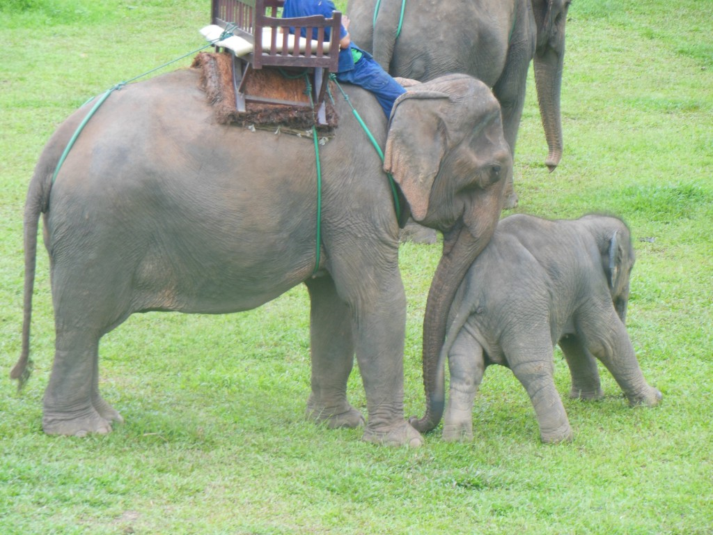 laos-tiger-trail-nam-ou-elephant-farm-1359