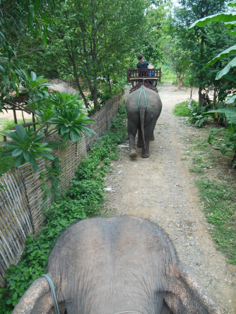 laos-tiger-trail-nam-ou-elephant-farm-1378