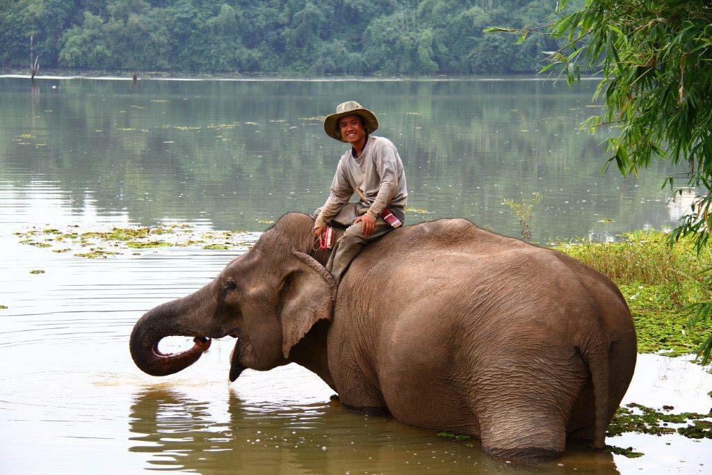 elephant conservation center centre sayaboury sayabouri xayabour