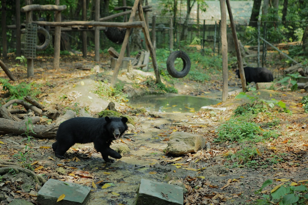 Laos-Luang-Prabang-Kuang-Si-Waterfall-Bear-Rescue-Center-Tiger-Trail-Photo-By-Kyle-Wagner-CEB_7320