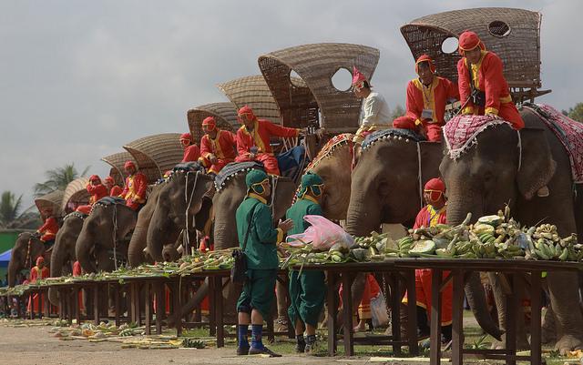 Elephant Caravan Luang Prabang Elephant Baci