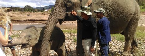 Baby Elephant Excursion in Luang Prabang