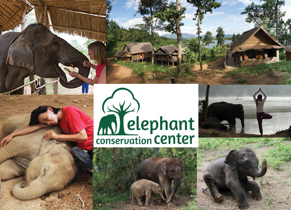 Elephant Conservation Center Laos