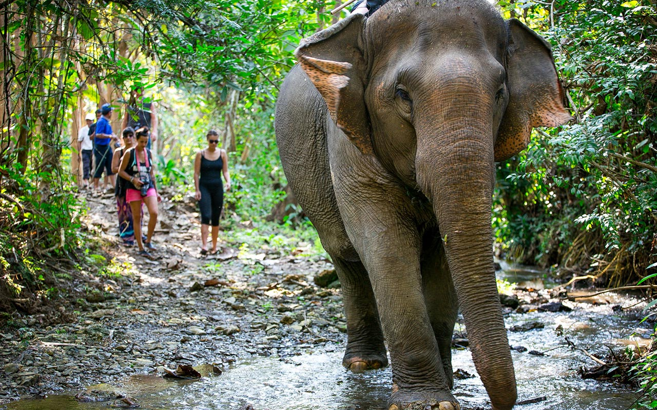 Mandalao Elephant Tour