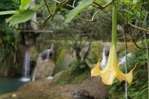 Waterfall Luang Prabang, Elephant Village Tiger Trail tour
