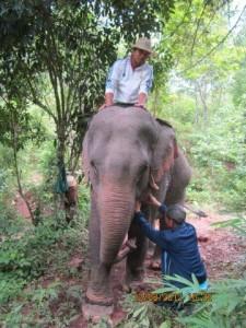 Elephant adventure tour in Laos