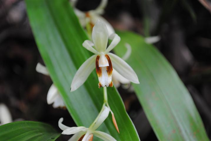 Orchid tour in Laos, Vientiane