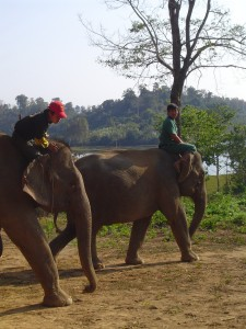 Sayabouli Elephant Conservation Center in Laos