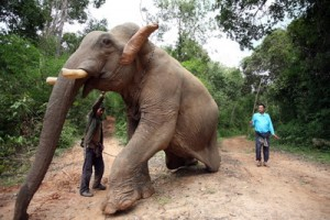 Laos Elephant Interaction Program