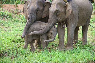 Laos Elephant Center