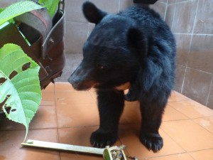 Bear Rescue Center Laos 2