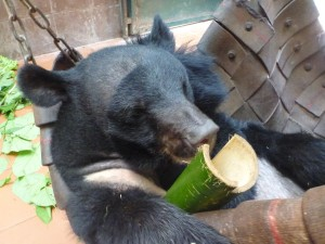 Bear Rescue Center Laos 1