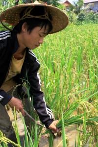 Living Land Farm Laos 10