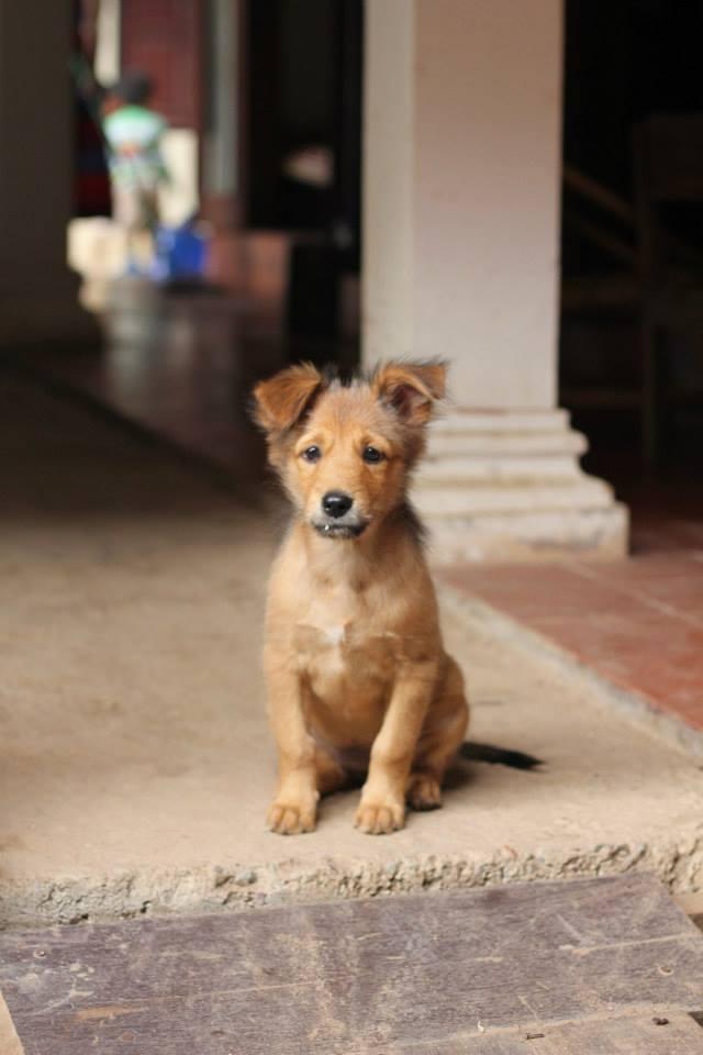 Dog Luang Prabang Laos