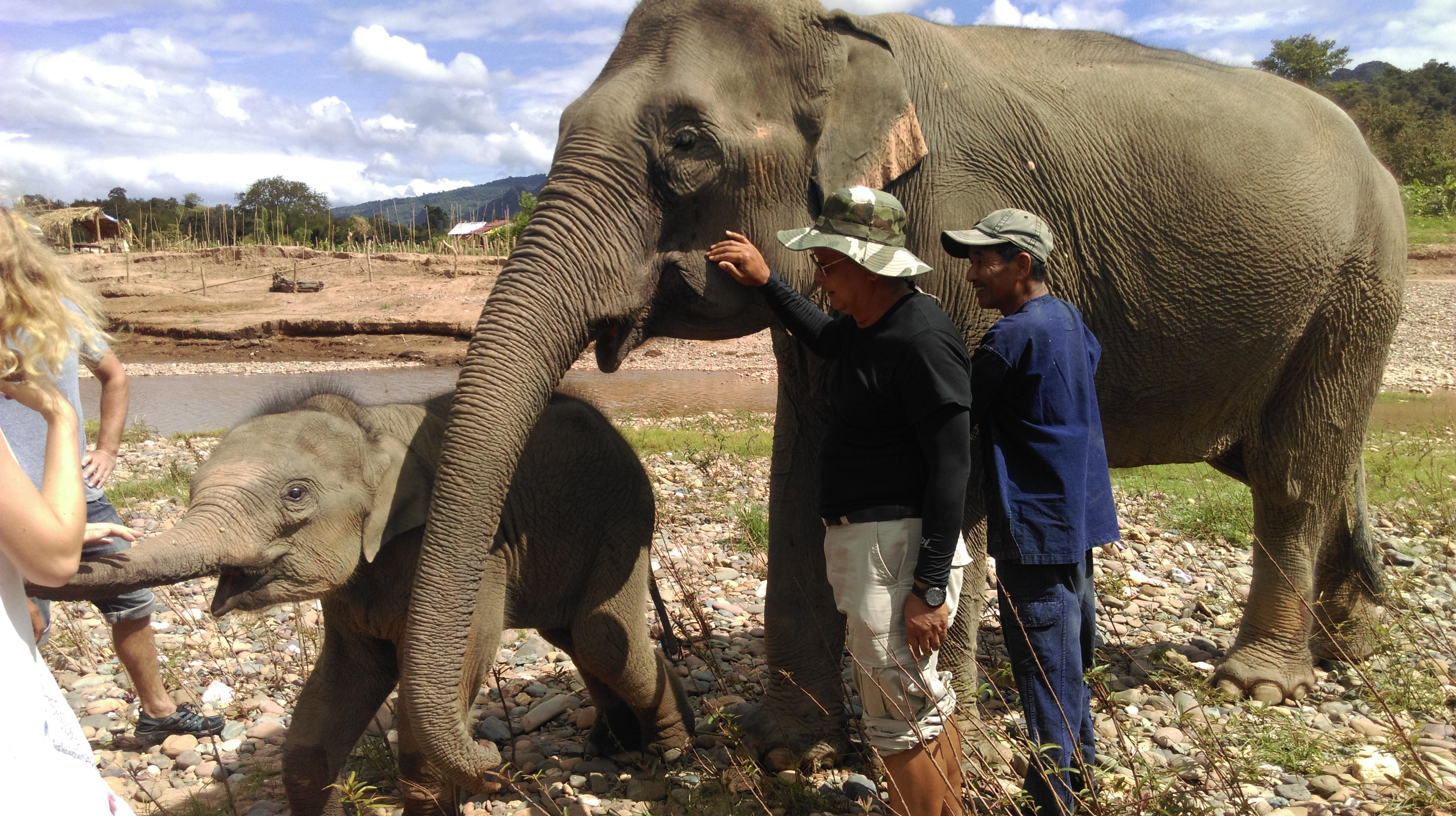 Luang Prabang Elephant