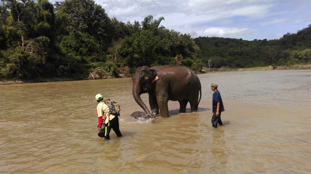 Luang Prabang Elephant Excursion